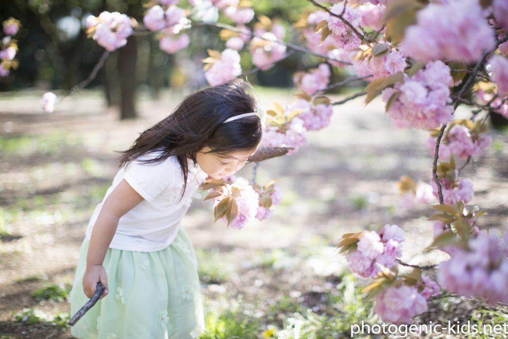 【入園入学】桜シーズンのご予約開始いたしました!