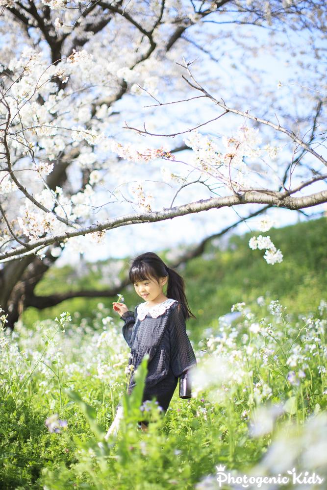 桜と一緒に子供の写真を撮る際のロケ場所の選び方