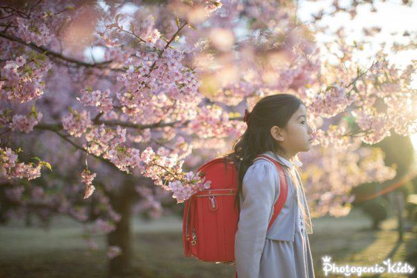 次女が入学したので桜とランドセルの写真を撮ってきました