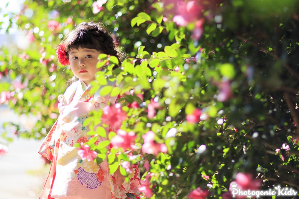 【速報】立川諏訪神社 七五三 出張撮影