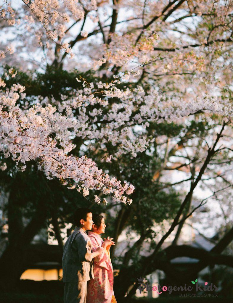 桜着物ポートレート